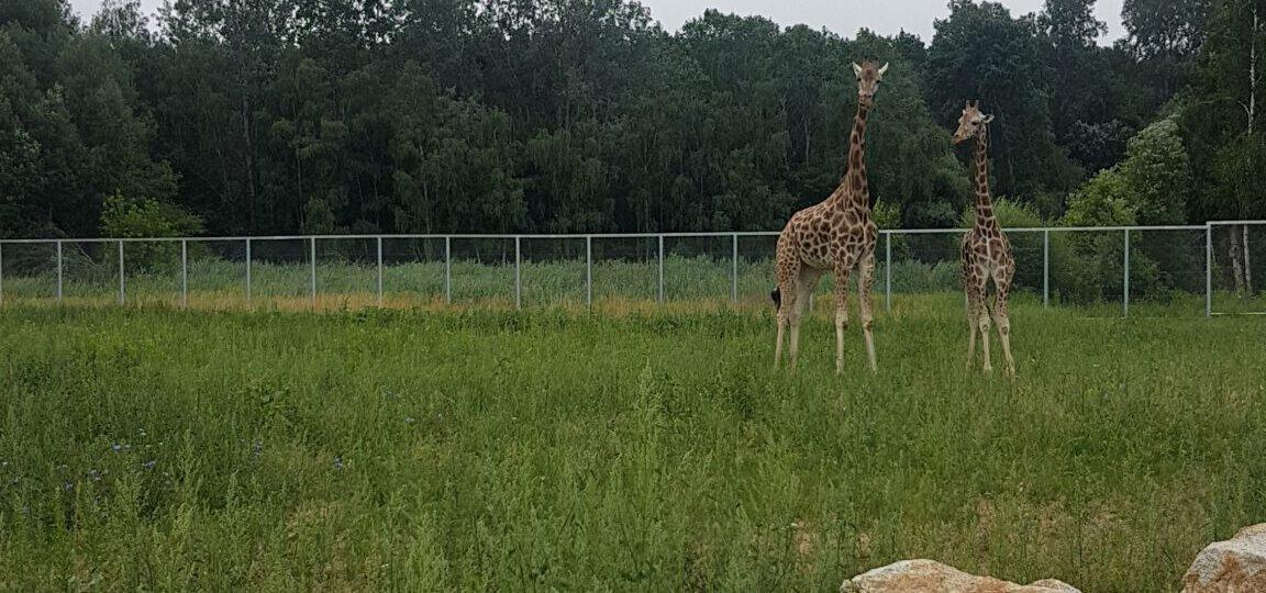 Zoo 11