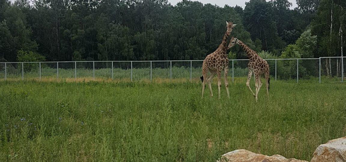 Zoo 12