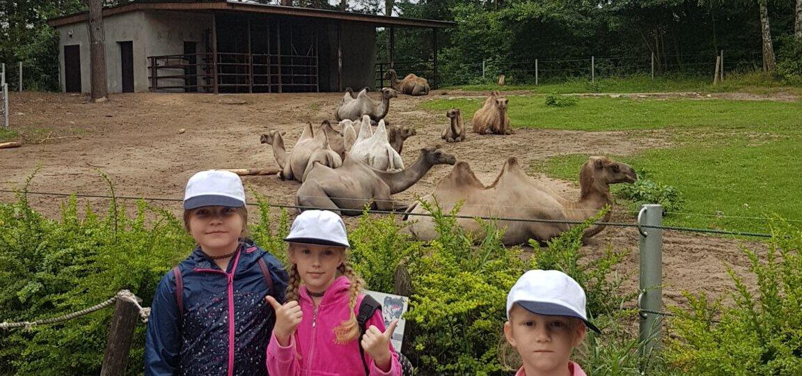 Zoo 20
