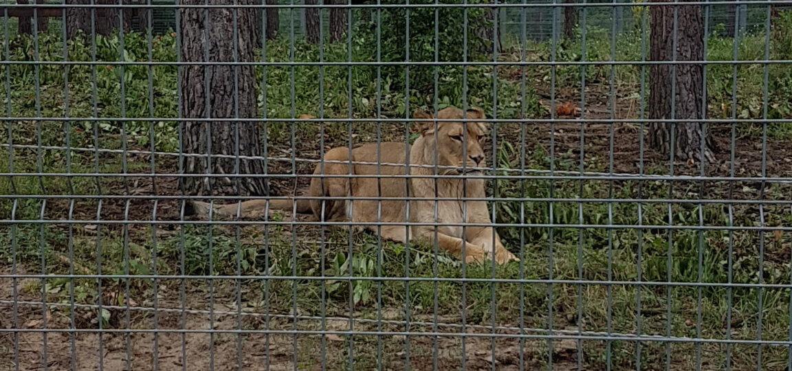 Zoo 23
