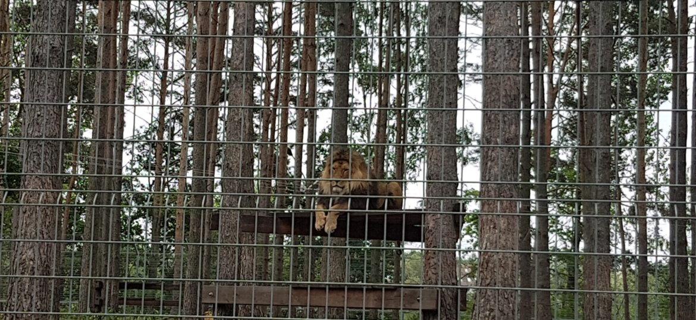 Zoo 25