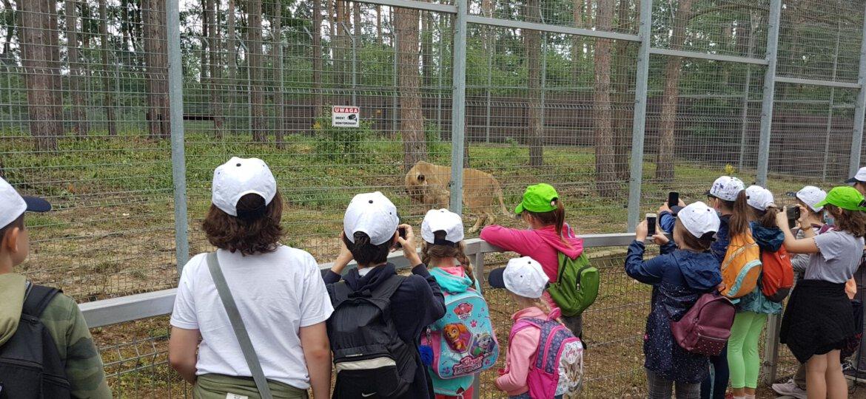Zoo 26