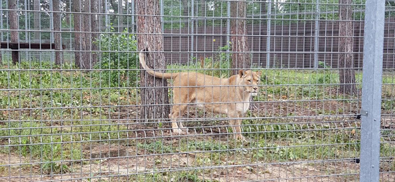 Zoo 28