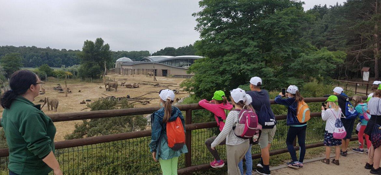 Zoo 32