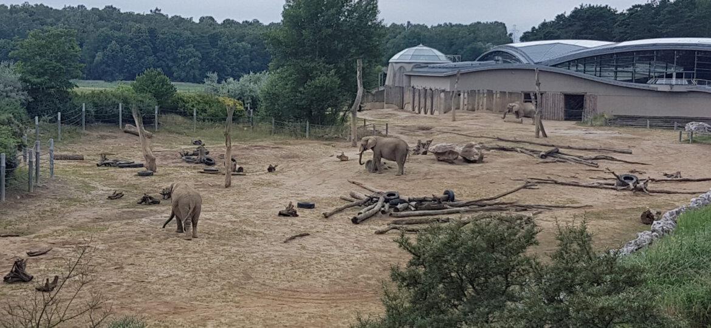 Zoo 34