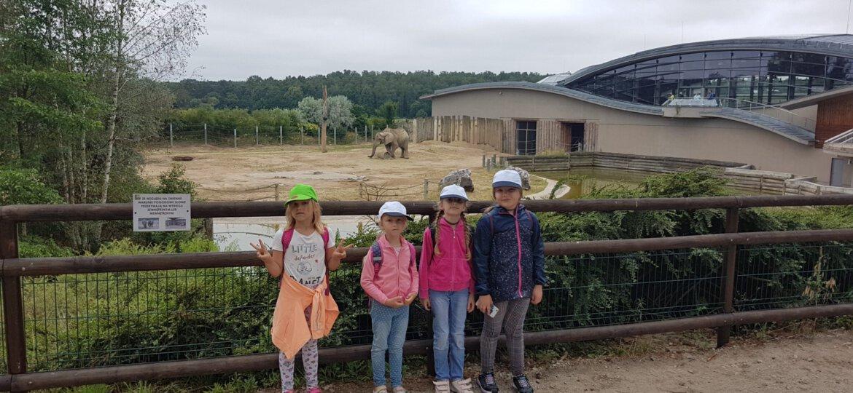 Zoo 38