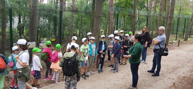 Zoo 39